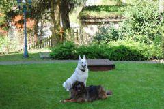 Birdie-und-Otto-unsere-Hunde